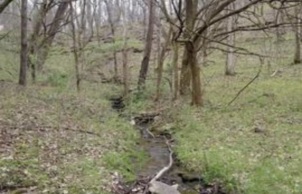 0 Ward Hollow Rd Property Photo - Brush Creek, TN real estate listing