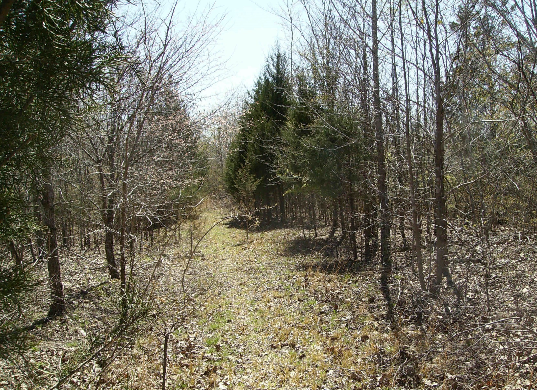 0 Hartley Cemetery Rd Property Photo - Sugar Tree, TN real estate listing