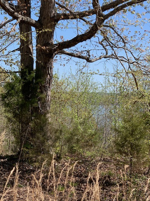 0 N of Holland Point Road Property Photo - Stewart, TN real estate listing