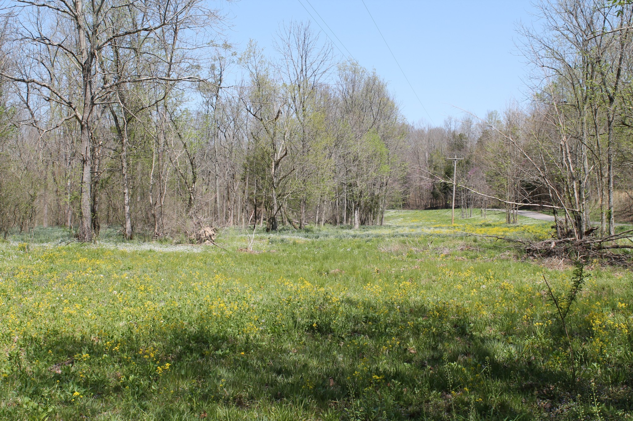 0 Cotton Hollow Property Photo - Red Boiling Springs, TN real estate listing