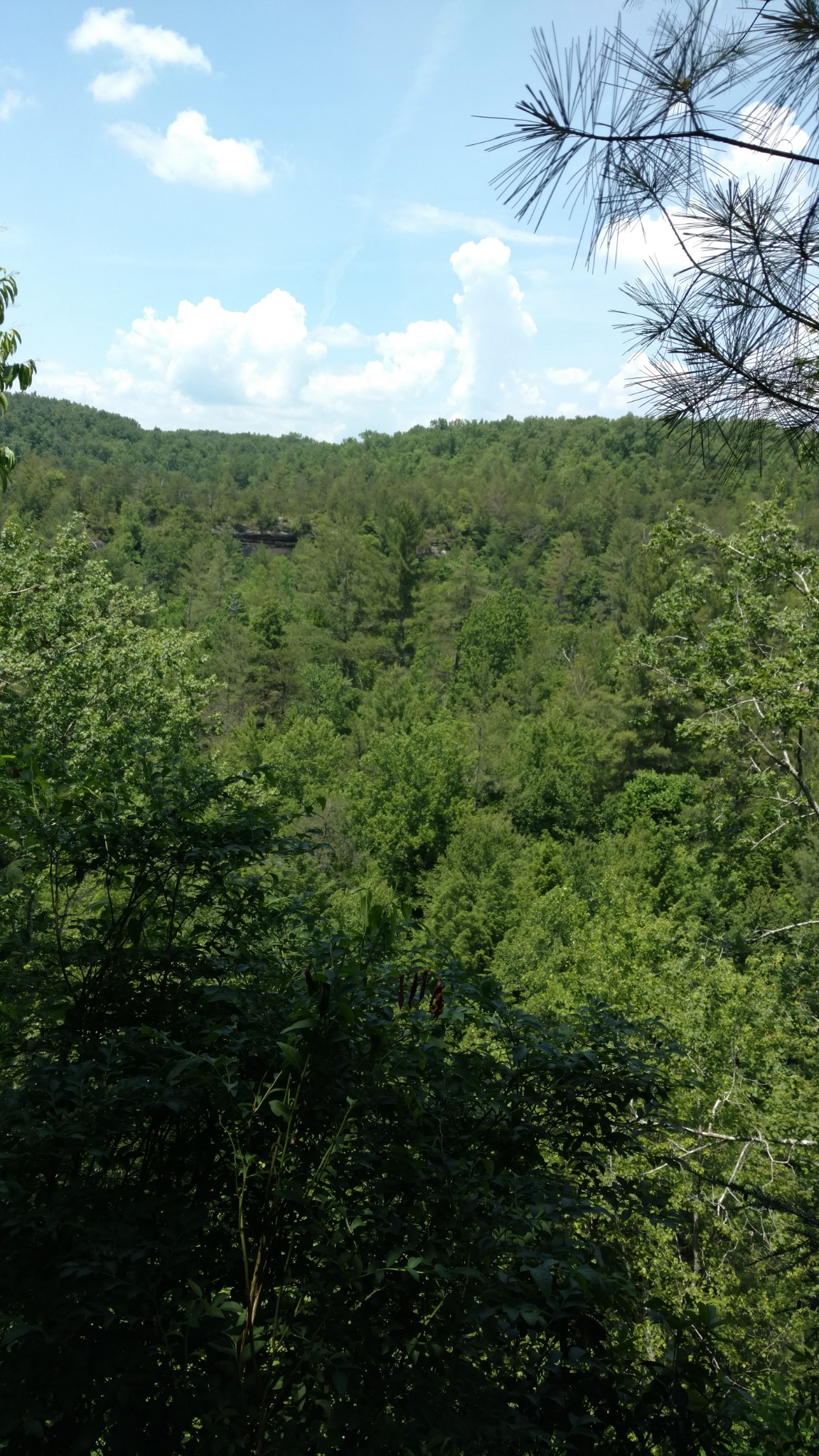 6299 Delina Rd Property Photo - Petersburg, TN real estate listing