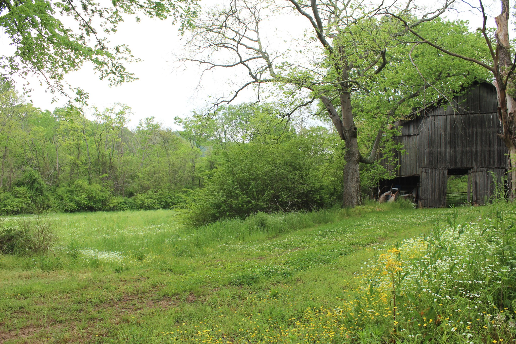 4709 Catheys Creek Rd Property Photo - Hampshire, TN real estate listing