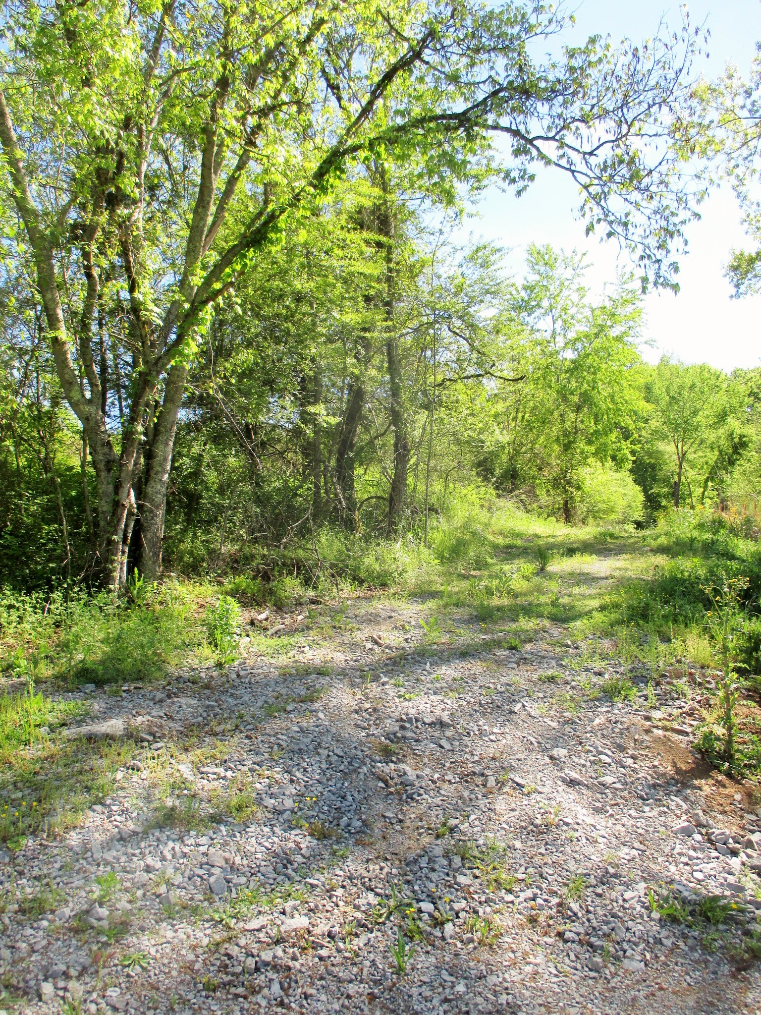 0 Jakes Branch Rd Property Photo - Beechgrove, TN real estate listing