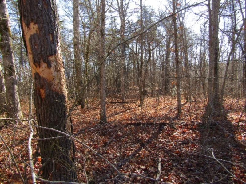 19 N Lake Trail Property Photo