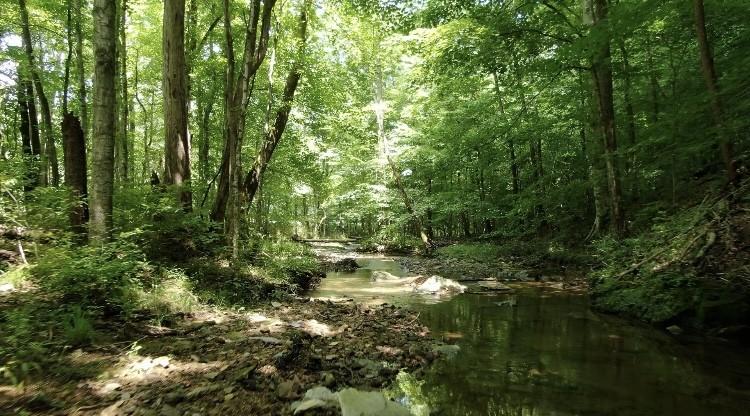 0 Baptist Branch Road Property Photo