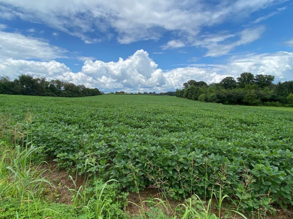 6.68 Acres Tillable Land Real Estate Listings Main Image