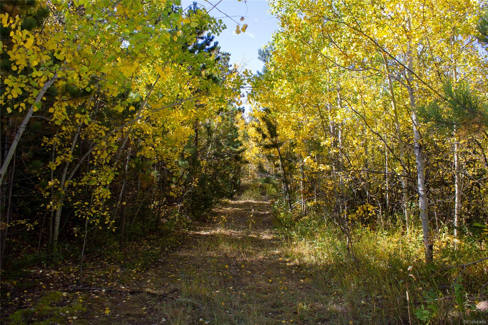 0 Rist Canyon Road, Bellvue, CO 80512 - Bellvue, CO real estate listing