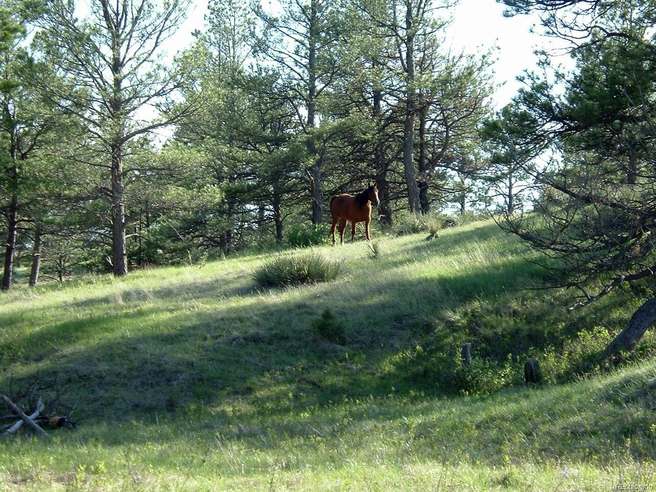 23578 E Lost Creek Trail, Agate, CO 80101 - Agate, CO real estate listing