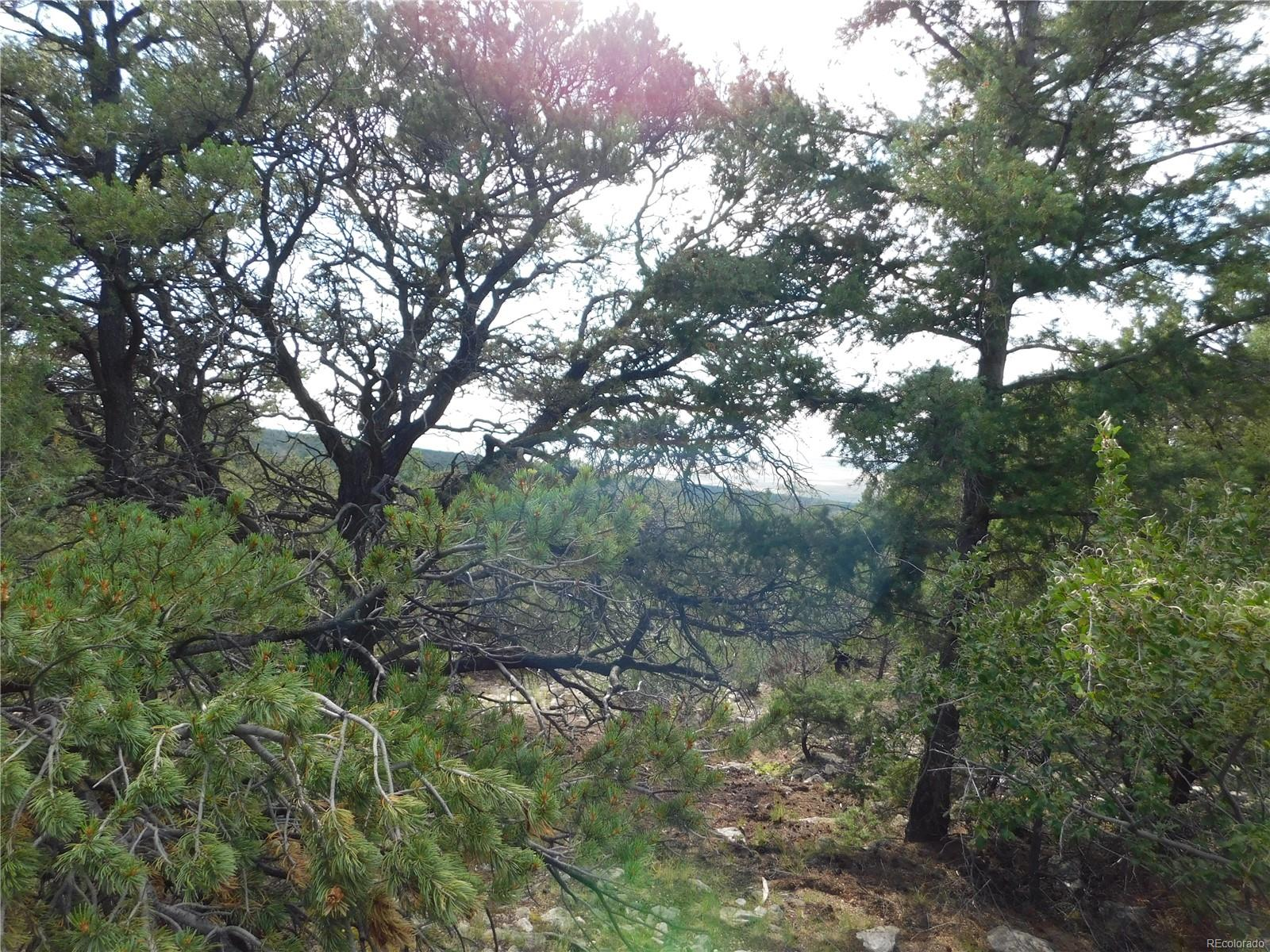 304 Arrastre Road, Mosca, CO 81146 - Mosca, CO real estate listing