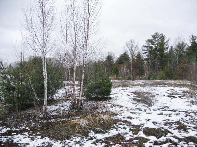 0 Peterson Road Property Photo - Sand Lake Twp, WI real estate listing
