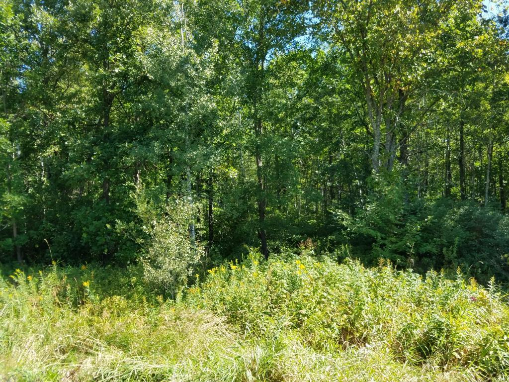 Lot 4 Wildcat Road Property Photo - Spooner, WI real estate listing