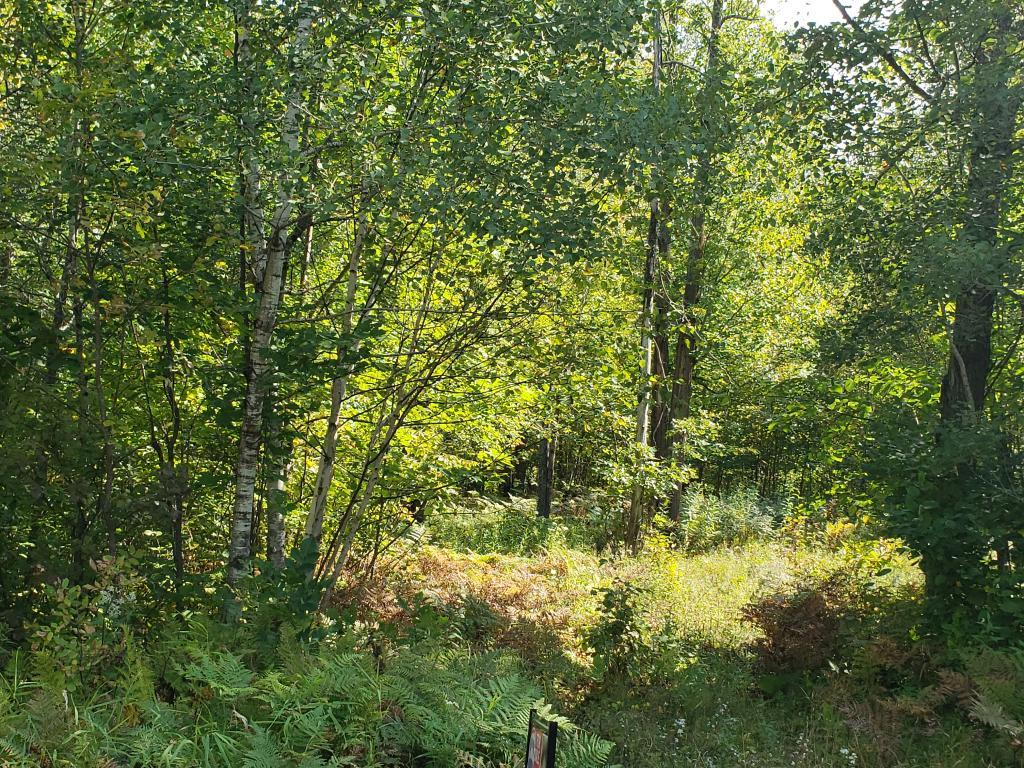 41286 Yellow Birch Lane Property Photo