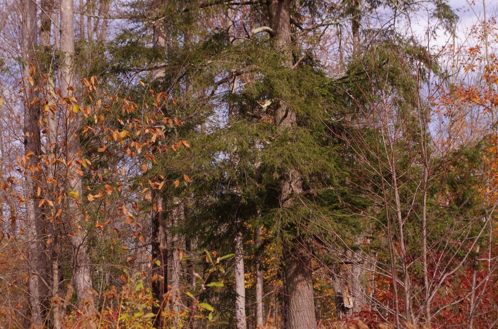 00 Old Grade Rd Property Photo - Grand View, WI real estate listing
