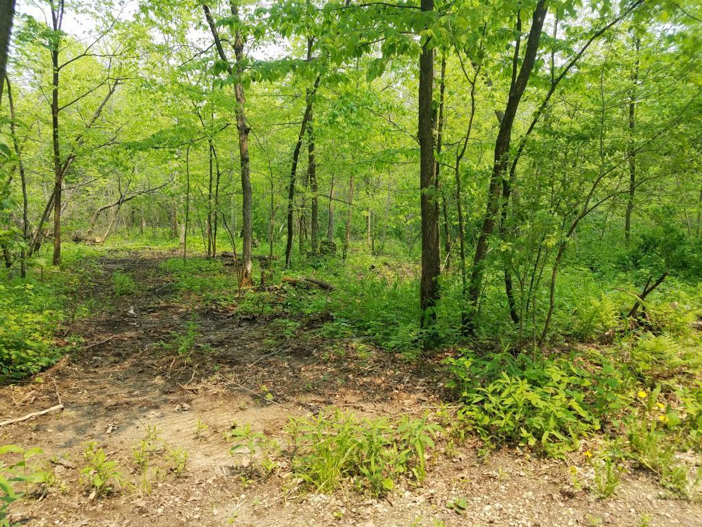 TBD 412th Property Photo - Mazeppa, MN real estate listing