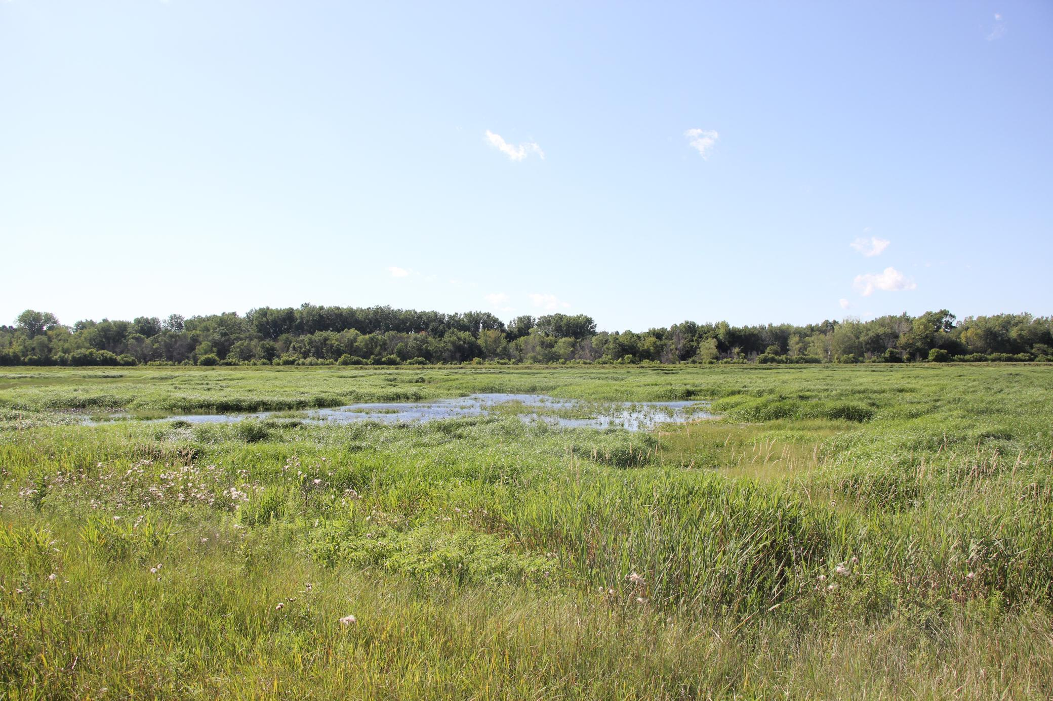 XXX State Hwy 99 Property Photo - Kasota Twp, MN real estate listing