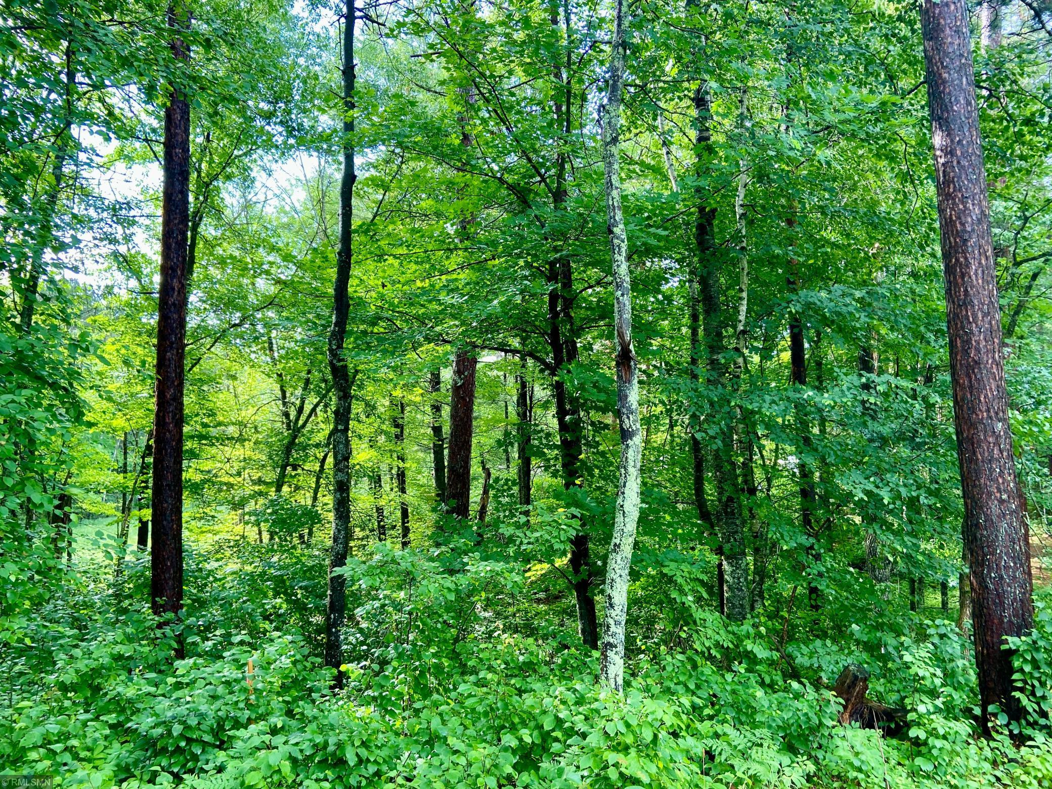XYZ Spruce Drive Property Photo - Windemere Twp, MN real estate listing