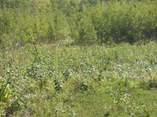 Lot 14 Bluff Creek Trails Property Photo - Superior, WI real estate listing