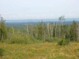 Lot 19 Bluff Creek Trails Property Photo
