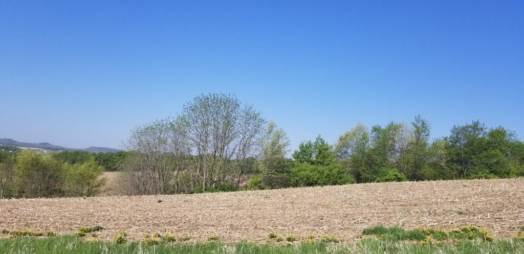 Lot 7 Bigelow Lane Property Photo - Arcadia, WI real estate listing