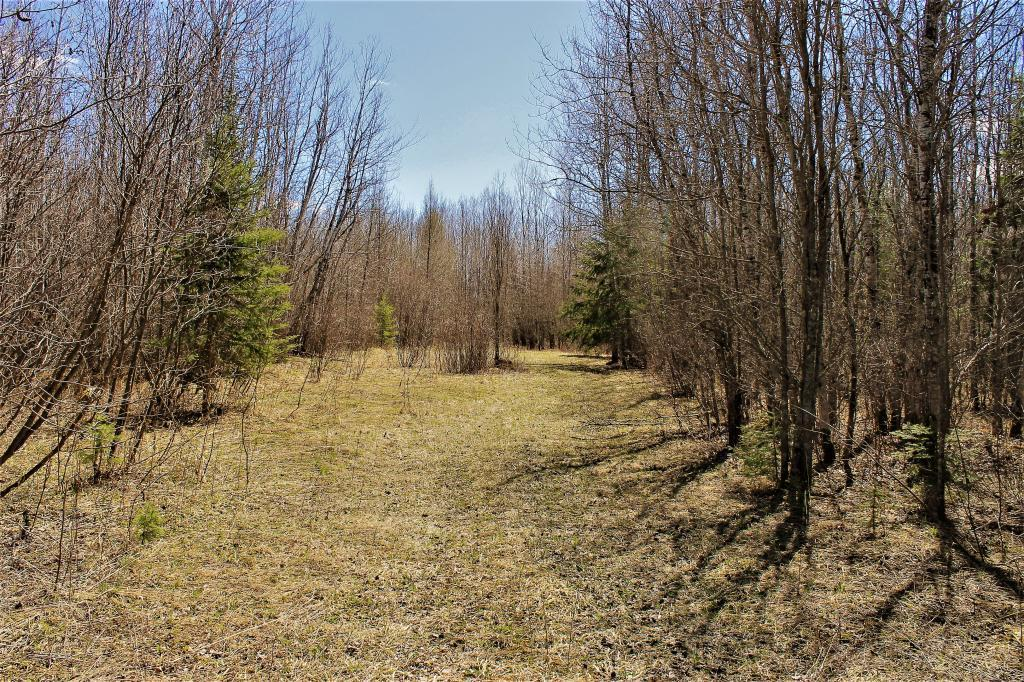 TBD County Rd 67 Property Photo - Big Falls, MN real estate listing