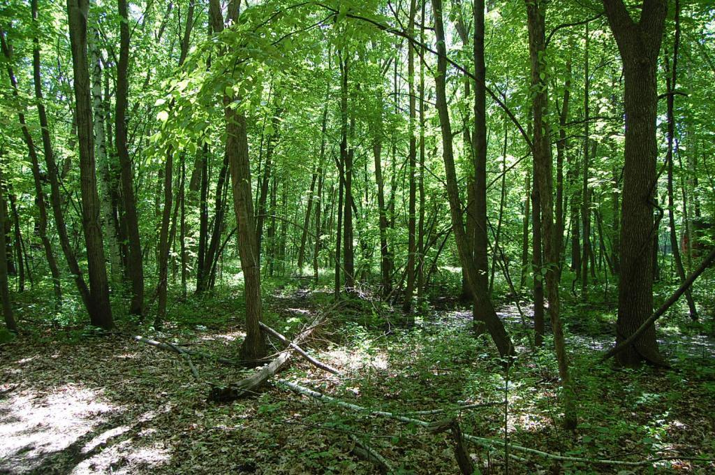 25179 Itasca Property Photo - Chisago City, MN real estate listing