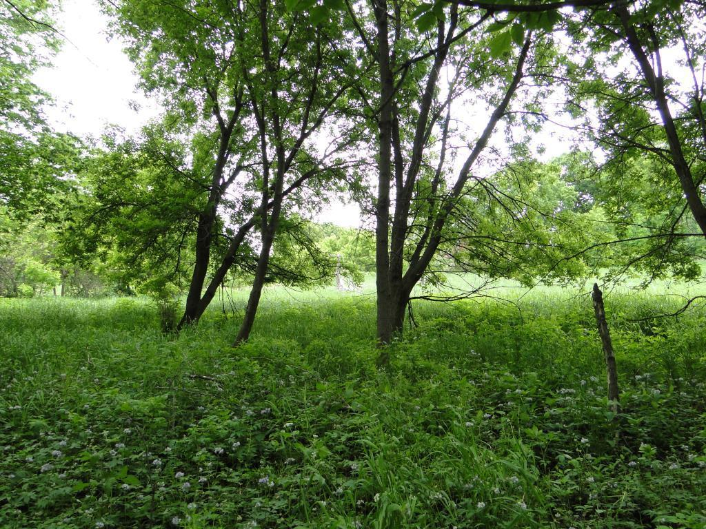 17775 County Road 40 Property Photo - Carver, MN real estate listing