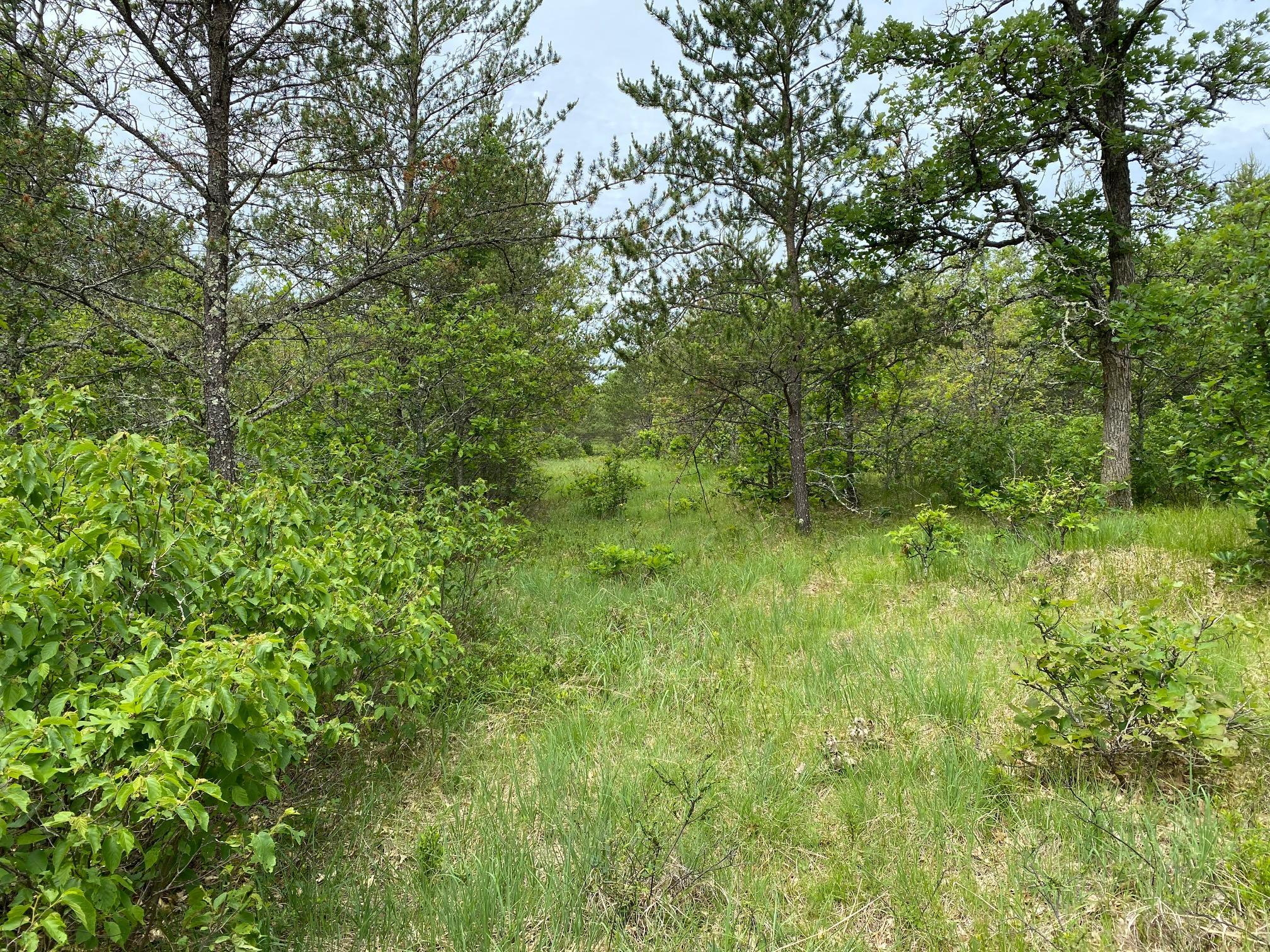 10 acres Flamang Rd Property Photo - Gordon Twp, WI real estate listing