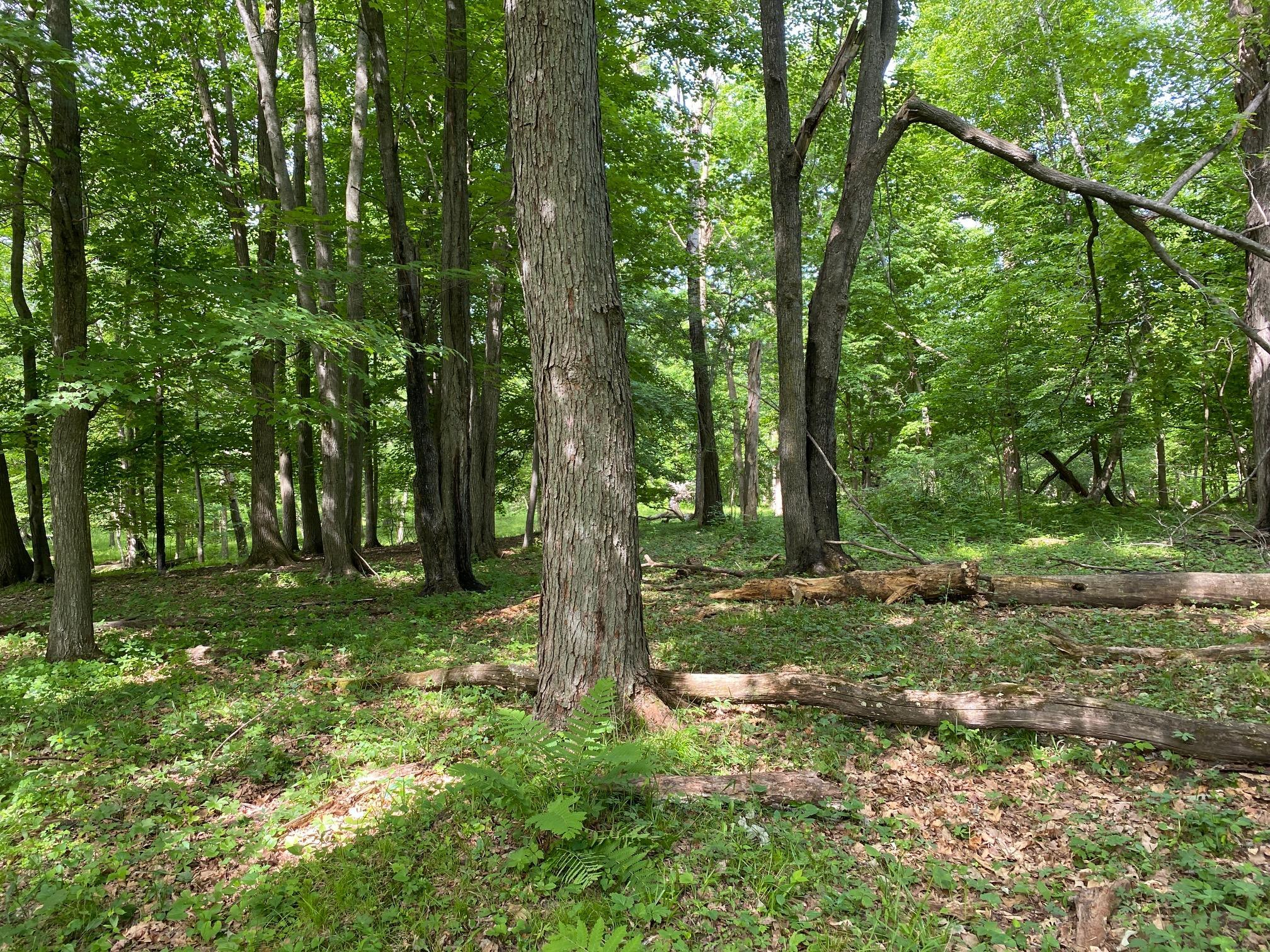 xxx 200th Property Photo - Hayland Twp, MN real estate listing