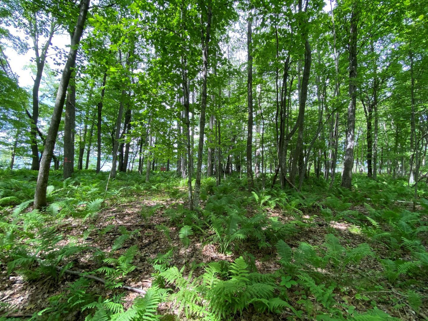 Lot 7 Ol Hays Property Photo - Birchwood, WI real estate listing