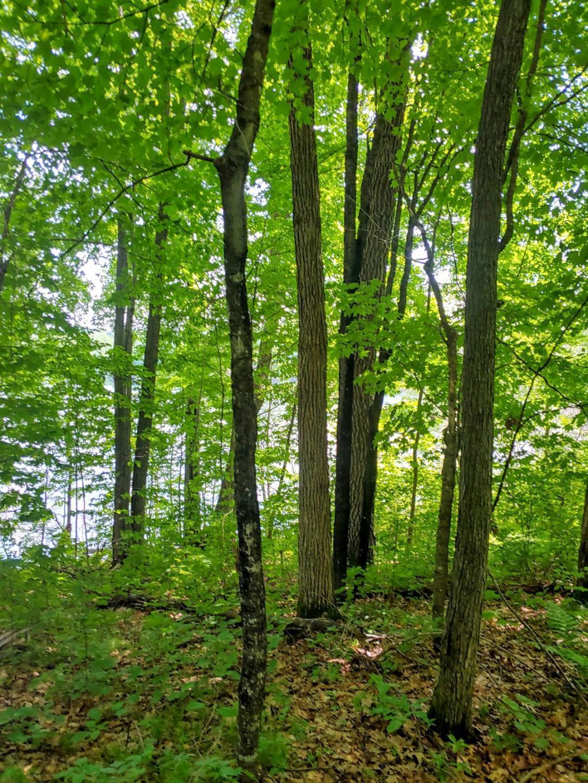 N2464 Shore Line Drive Property Photo - Birchwood, WI real estate listing
