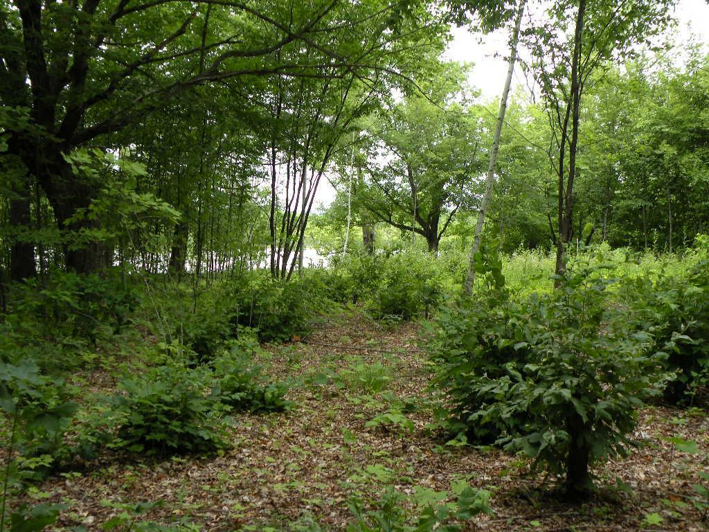 XXX Crooked Lake Lane SW Property Photo - Farwell, MN real estate listing