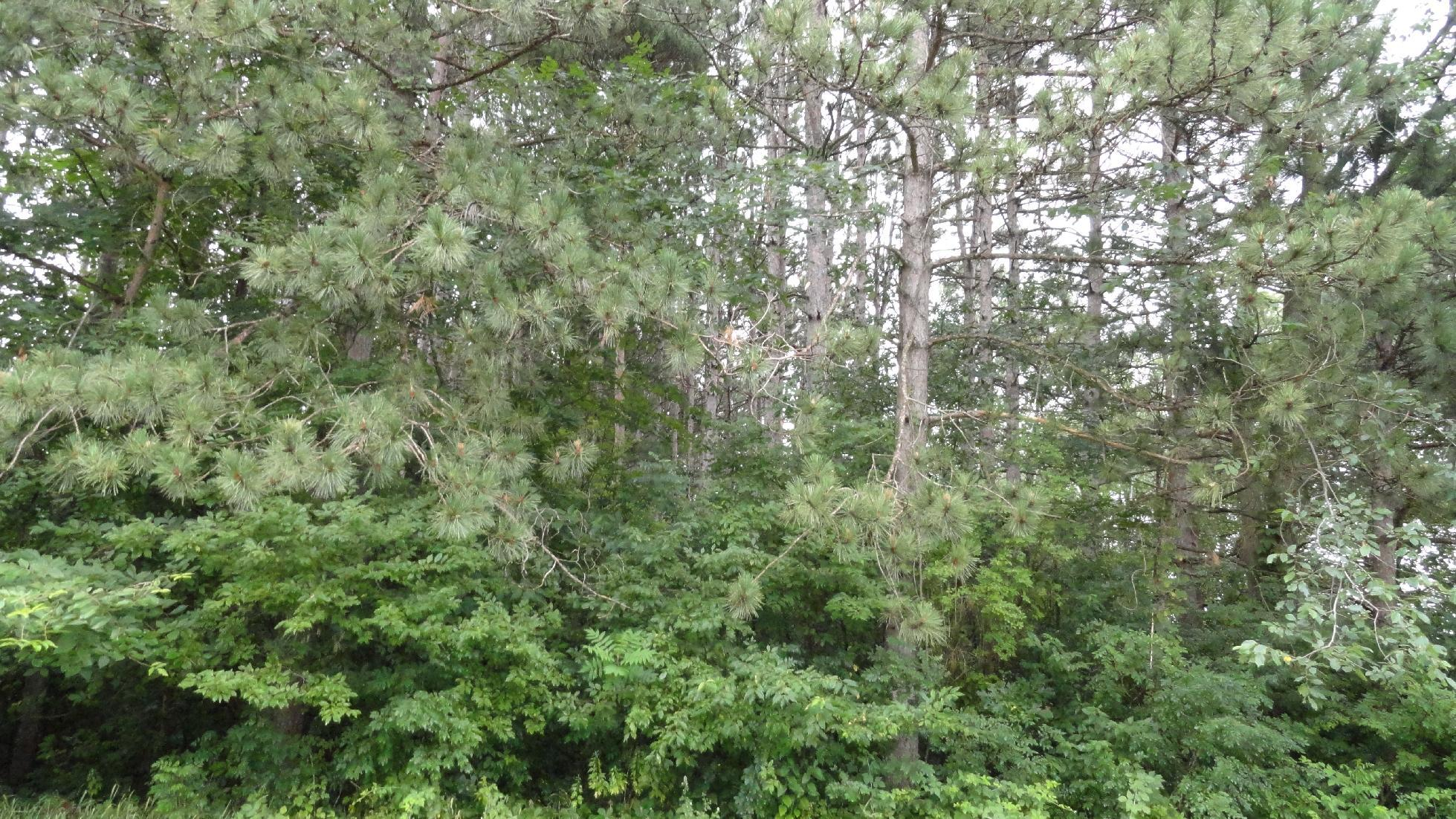 Lots 1, 3-10 Badger Avenue Property Photo - Bass Lake Twp, WI real estate listing
