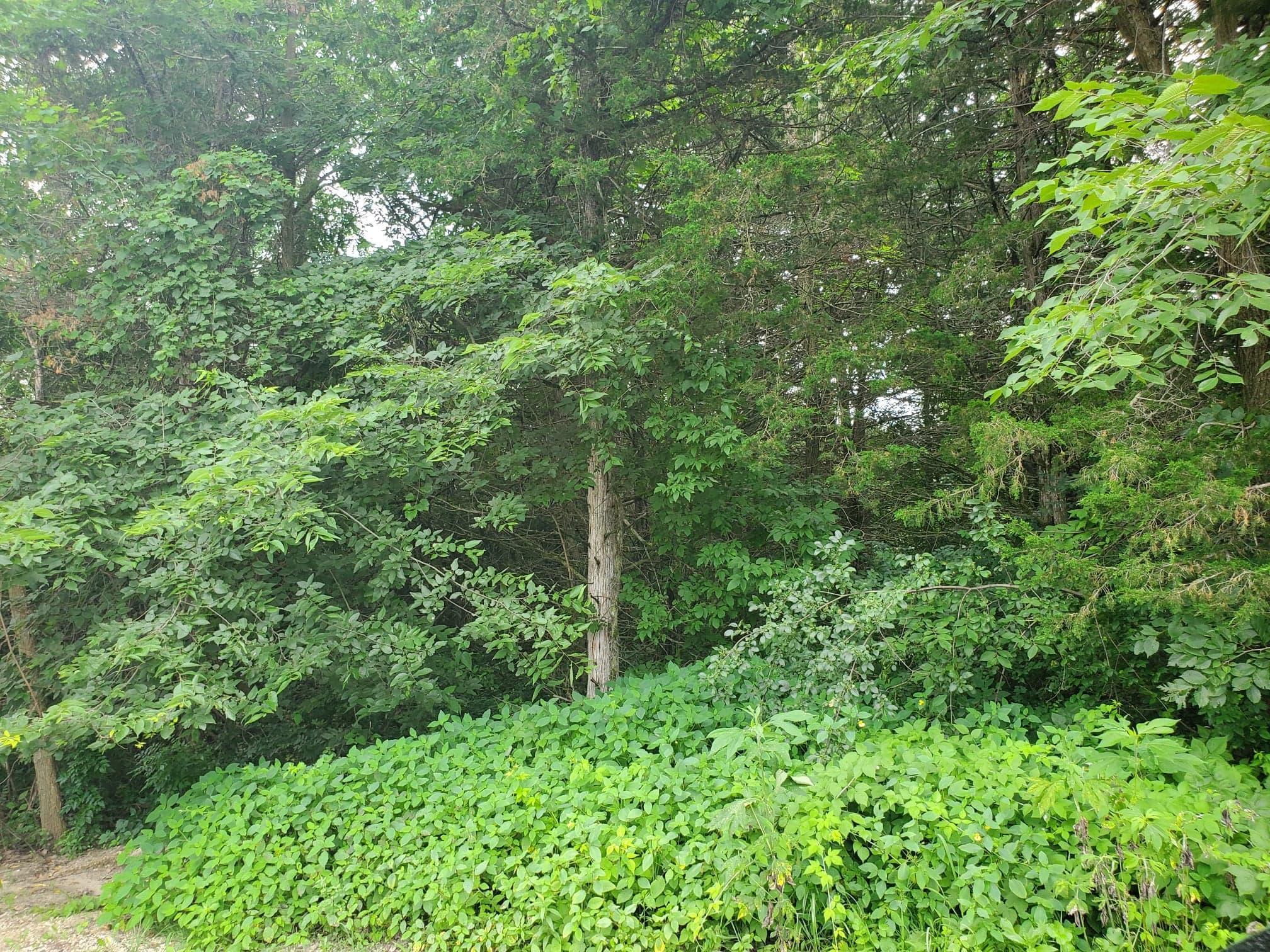 950 Cedar Point Lane SE Property Photo - Oronoco, MN real estate listing