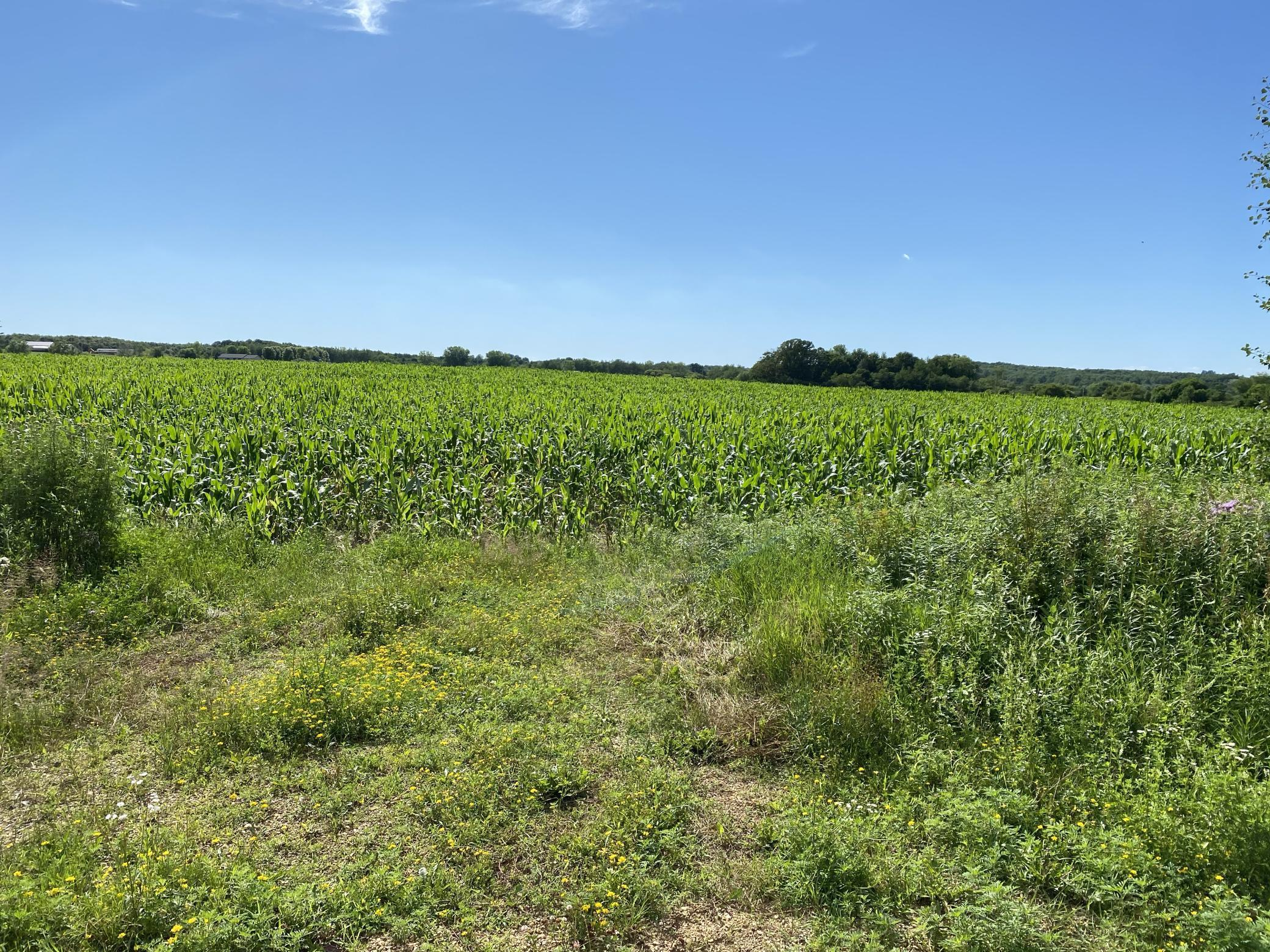 586 (lot 2) 315th Street Property Photo - Cady Twp, WI real estate listing