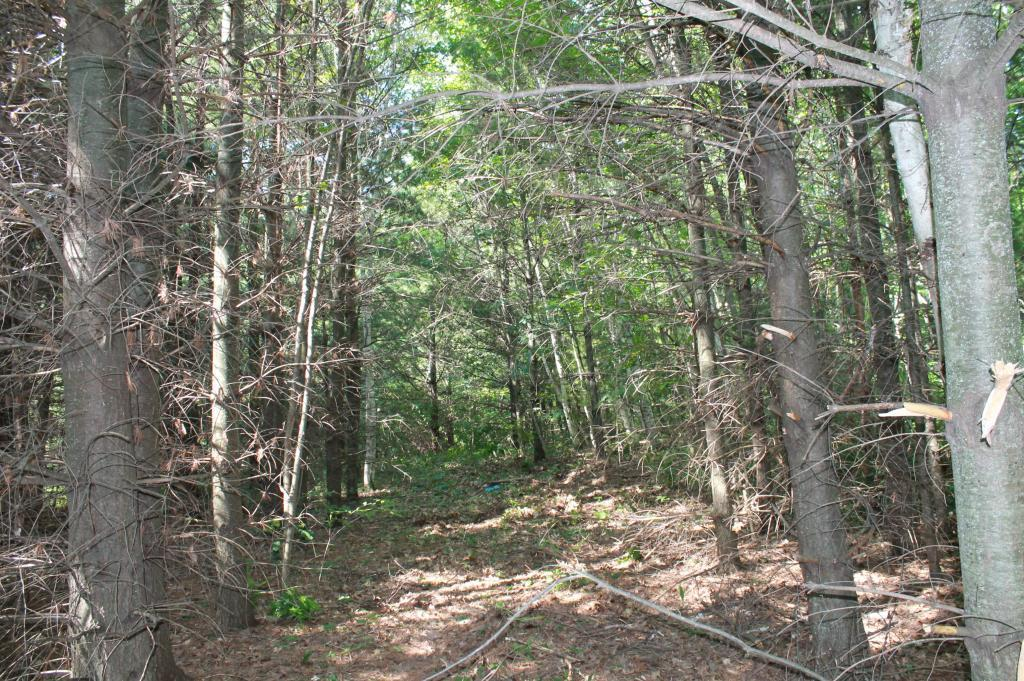 Lot 15 Lofty Pines Road Property Photo