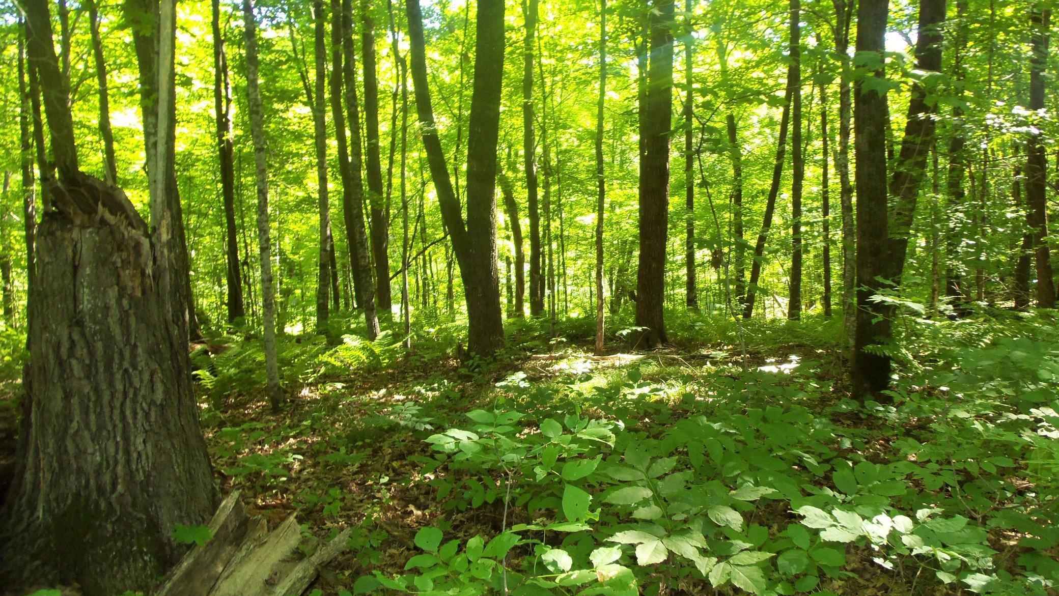 30.94 ACRES CHIPPEWA TRAIL Property Photo - Luck, WI real estate listing