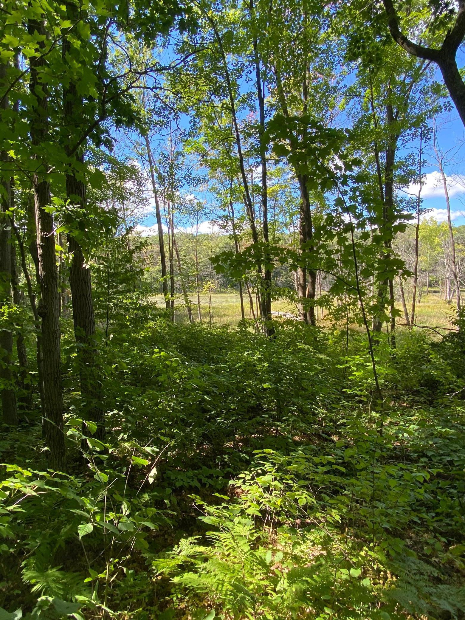 TBD Woodchuck Trail Property Photo - Cushing Twp, MN real estate listing