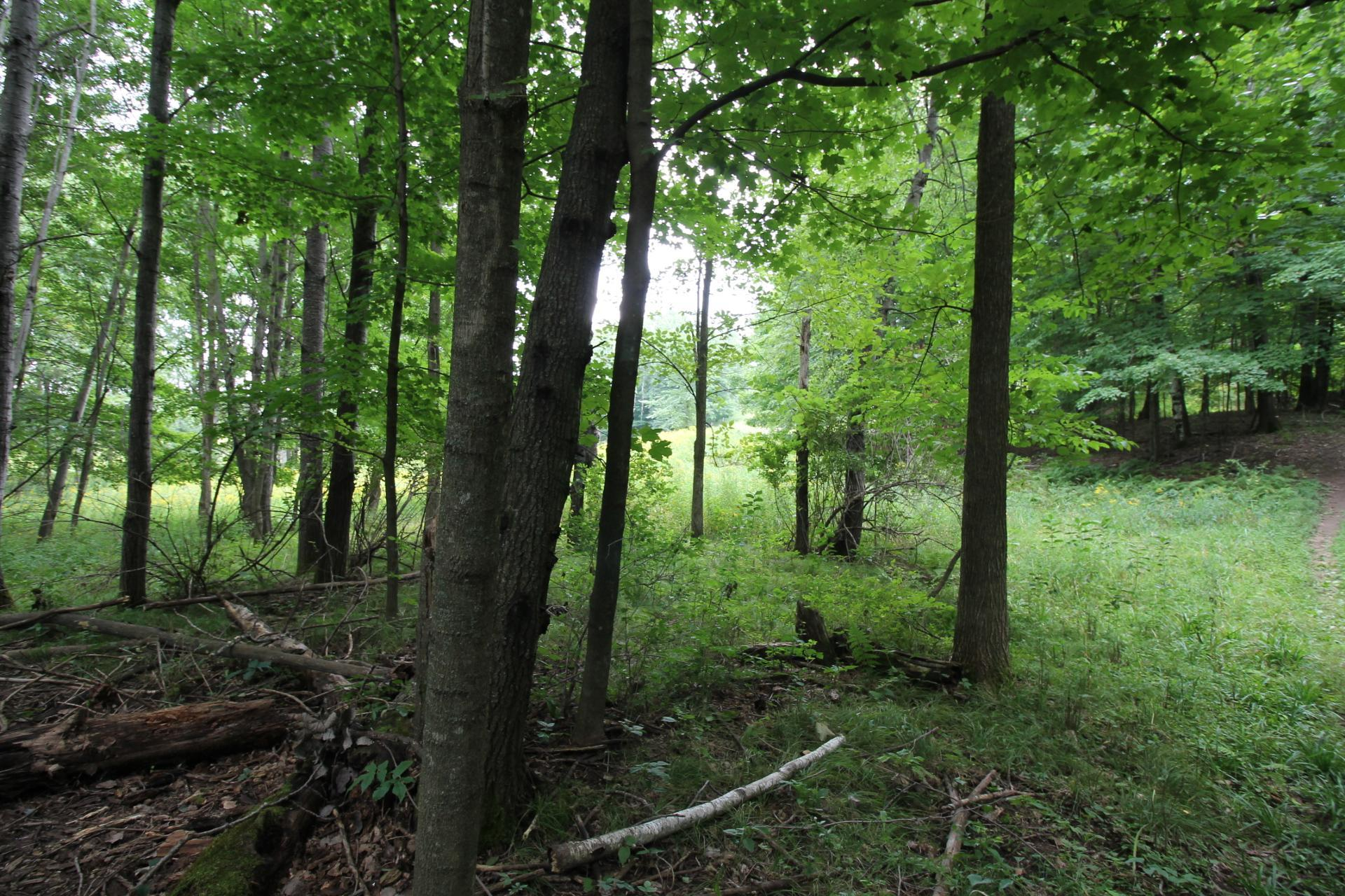 1540 Hines Lakeview Drive Property Photo - Cumberland, WI real estate listing