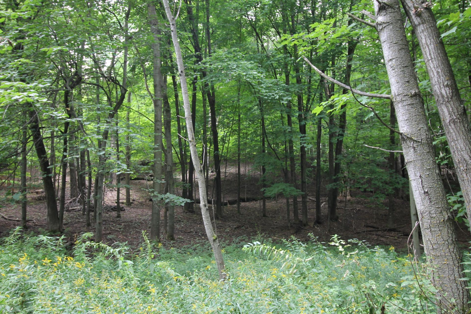 1580 Hines Lakeview Drive Property Photo - Cumberland, WI real estate listing
