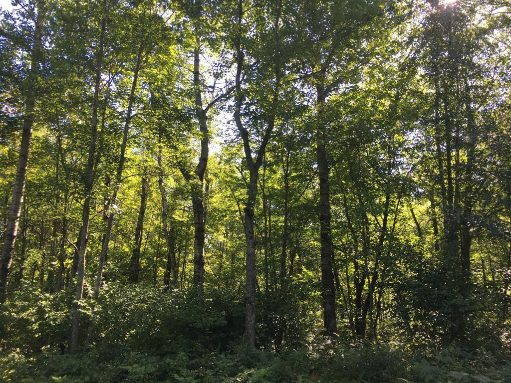 Lot 22 E Ruth Lake Road Property Photo - Iron River, WI real estate listing