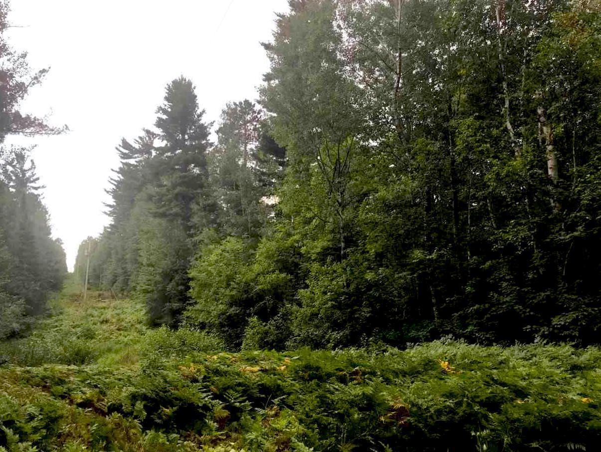 TBD Niles Bay Forest Rd Property Photo - Buyck, MN real estate listing