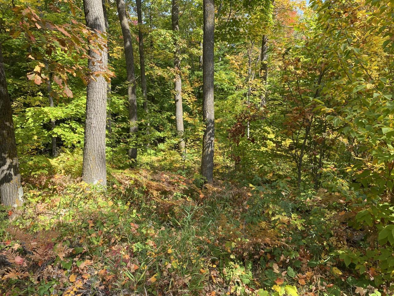 Lot 5 Blk 1 Fox Run Lane Property Photo - Cuyuna, MN real estate listing