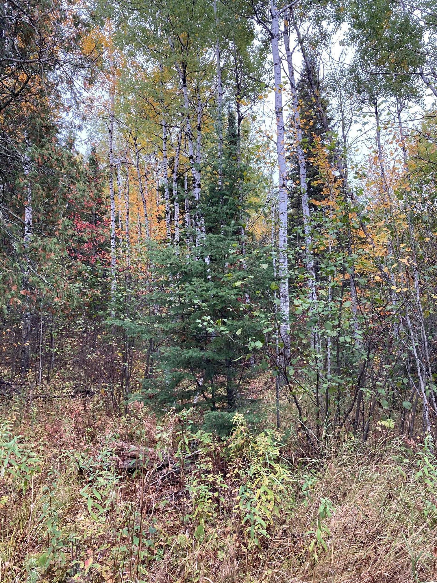 TBD Crane Lake Road Property Photo - Crane Lake, MN real estate listing