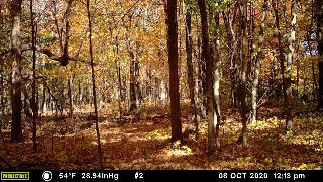 40 Acres Shilts Avenue Property Photo - Jump River Twp, WI real estate listing