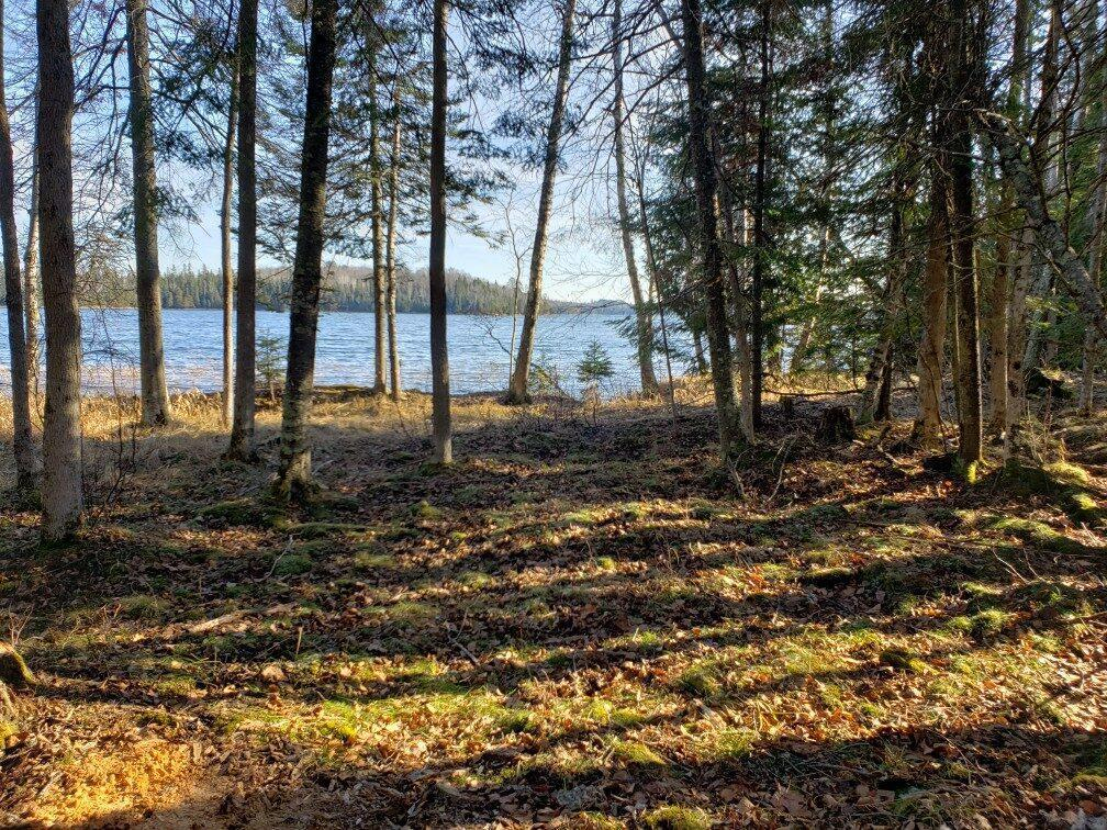 Deep Woods Real Estate Listings Main Image