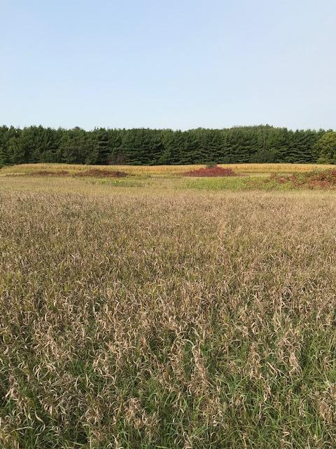 xxxx Pine Bluff (site15) Rd NW Property Photo - Pine Island, MN real estate listing