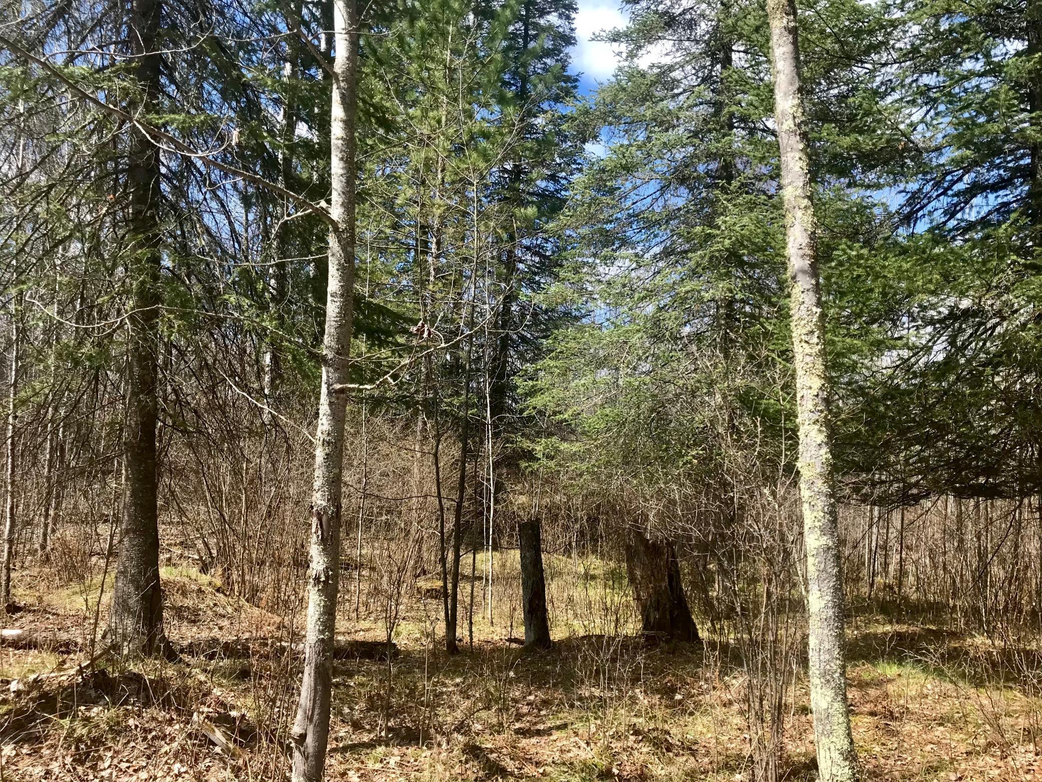 000 Bigfork Trail Property Photo