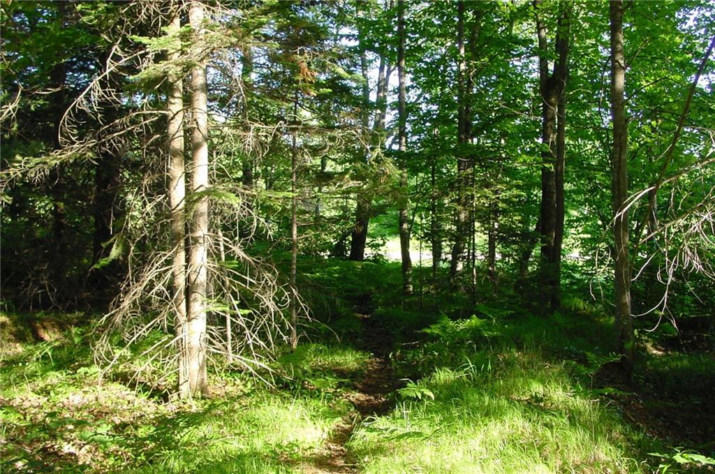24 Acres Hwy. 8 Property Photo - Weyerhaeuser, WI real estate listing