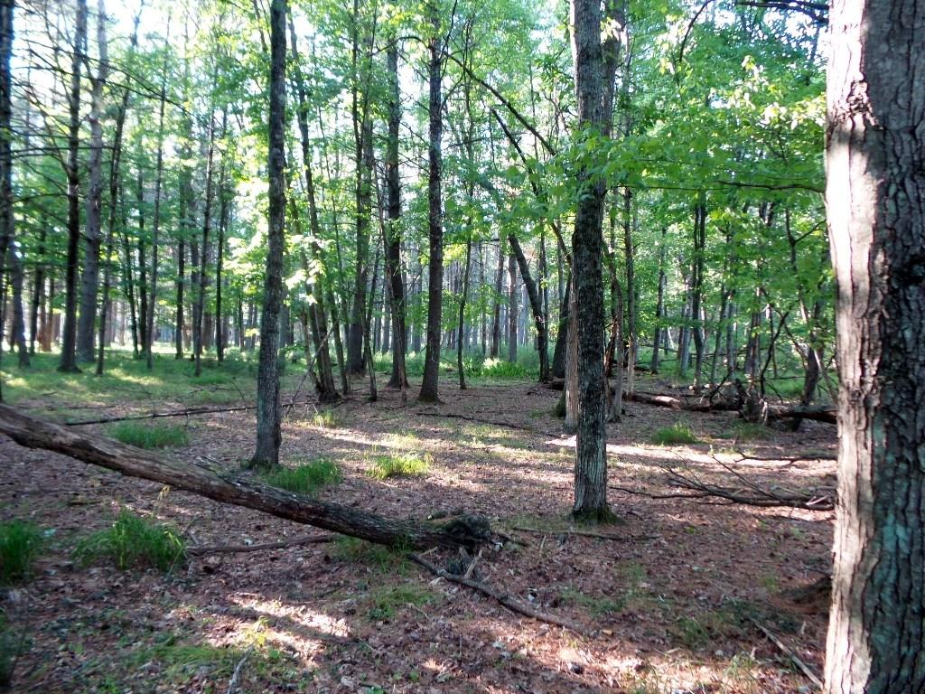 2.15 Acres Badger Lane Property Photo - Hatfield, WI real estate listing