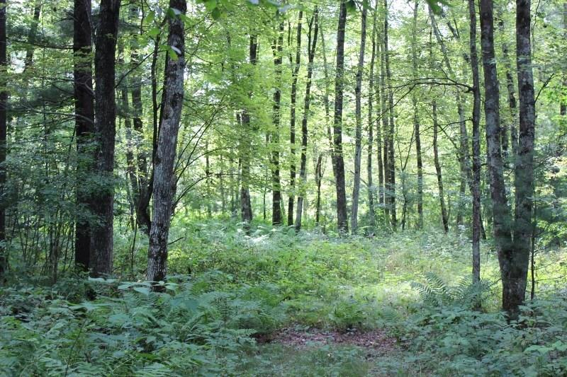 Lot #3 Halls Creek Ct Property Photo - Merrillan, WI real estate listing